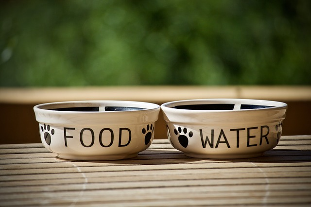 a water and food dish for dogs
