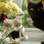a black cat standing by some flowers