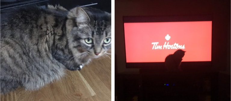 a cat sitting and a cat watching tv