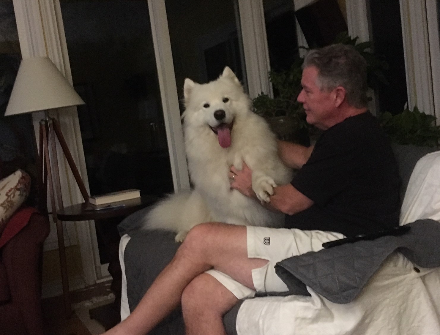 A man and a white samoyed