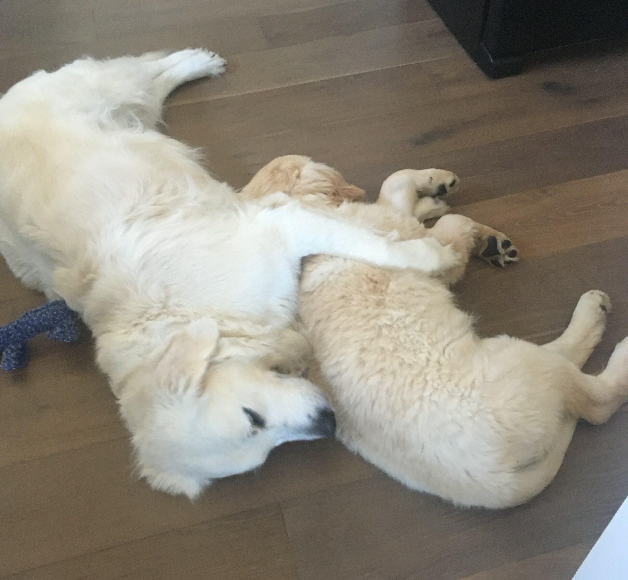 2 dogs sleeping
