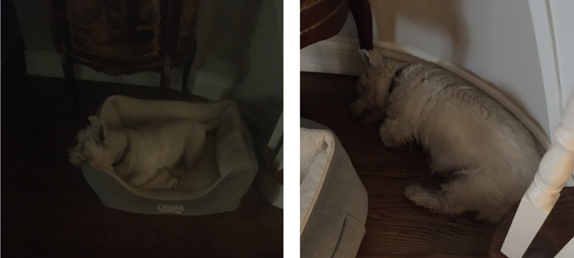 A dog sleeping in his bed and against a wall