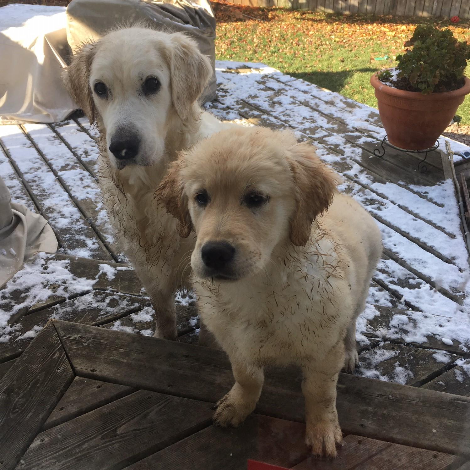 2 muuddy dogs, deck