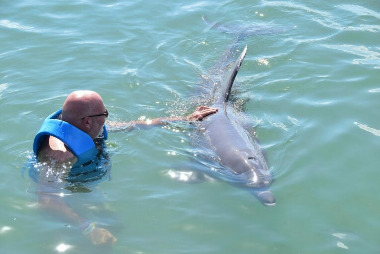 man patting dolphin
