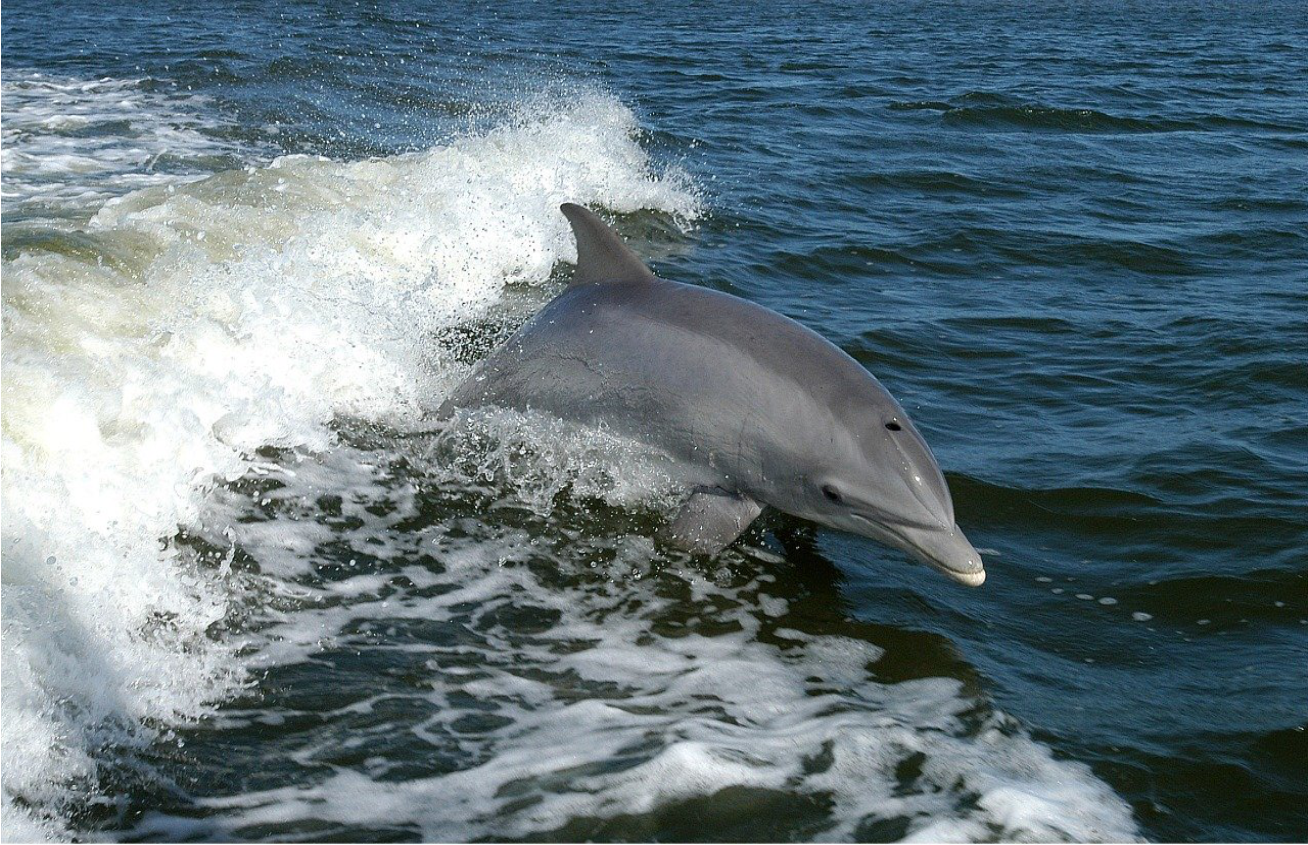 Plight of Dolphins - How We Can Help